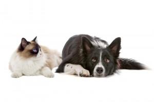 croquettes-pour-chien-et-chat